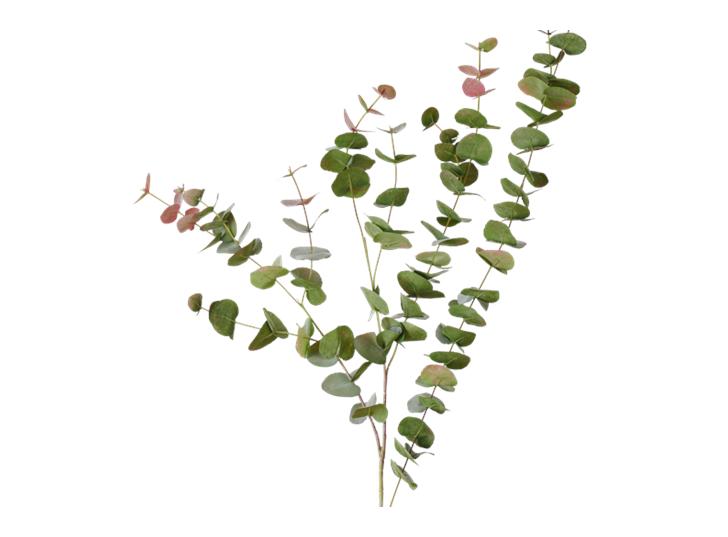 Eucalyptus Red Box Spray_Russet_Quare
