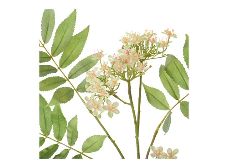 Rowan Blossom Stem_White_Detail