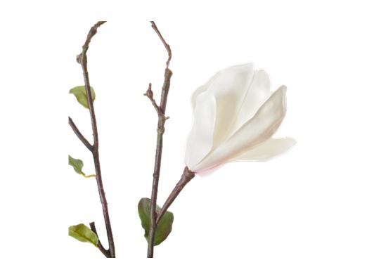 Magnolia Branch_White_Detail