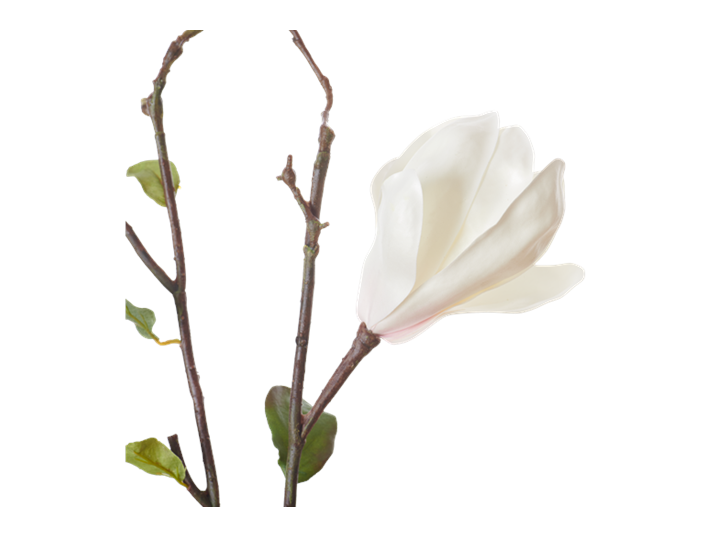 Magnolia Branch_White_Detail