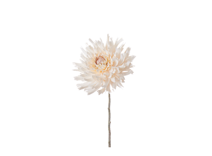 Dahlia Stem_Cream_Square
