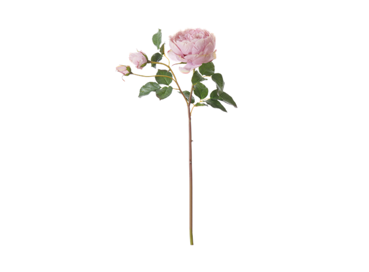 English Rose Short Stem_Dusky Pink_Front