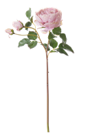 English Rose Short Stem, Dusky Pink