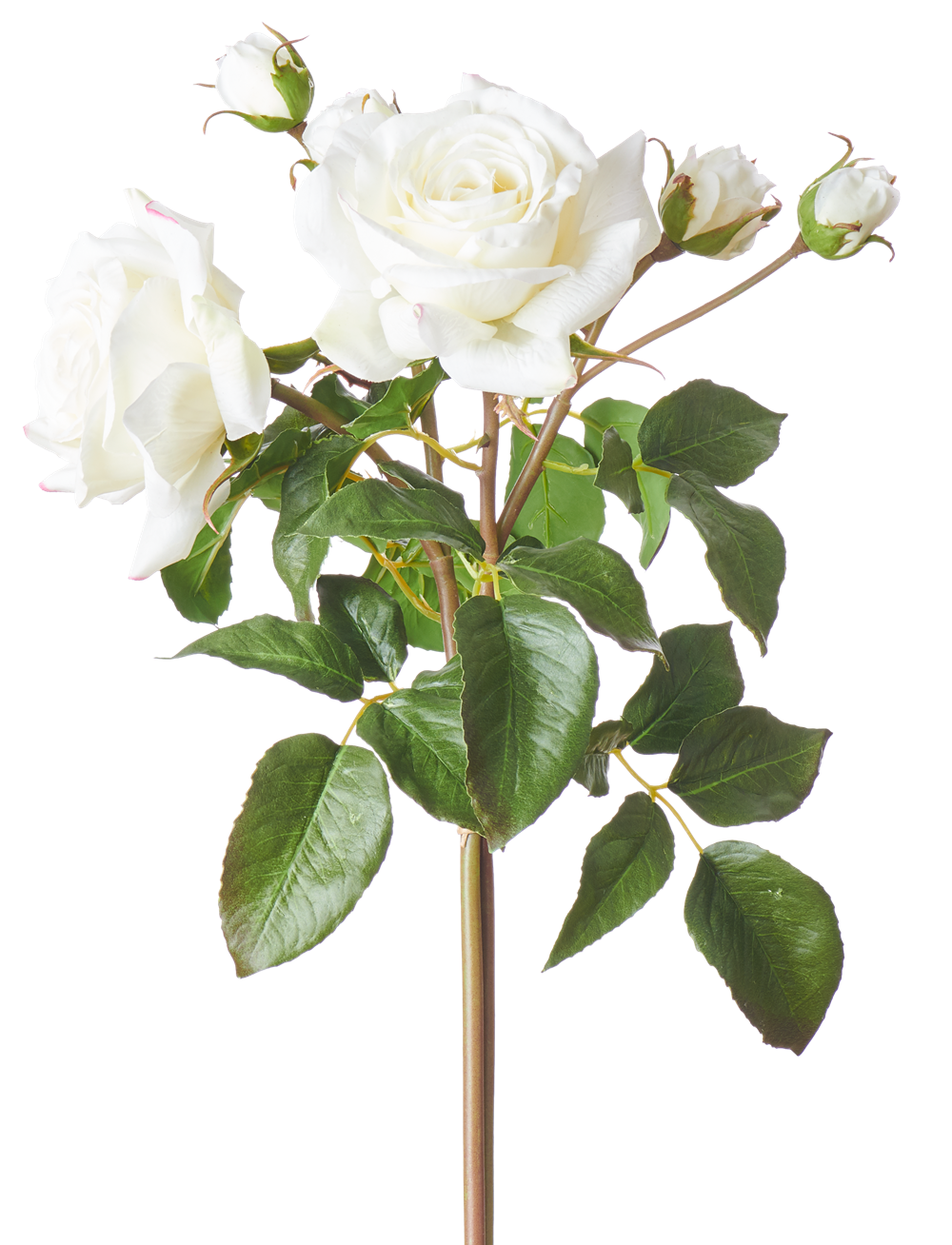 English Rose Bundle White_Square