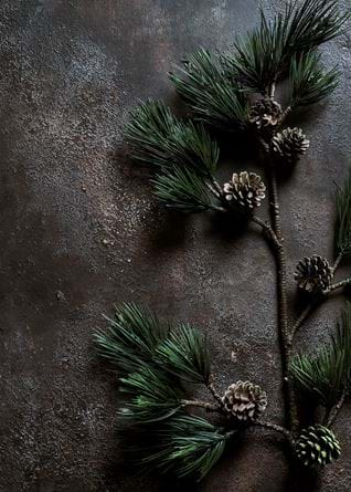 ALYMER_PINECONE_DEC_005