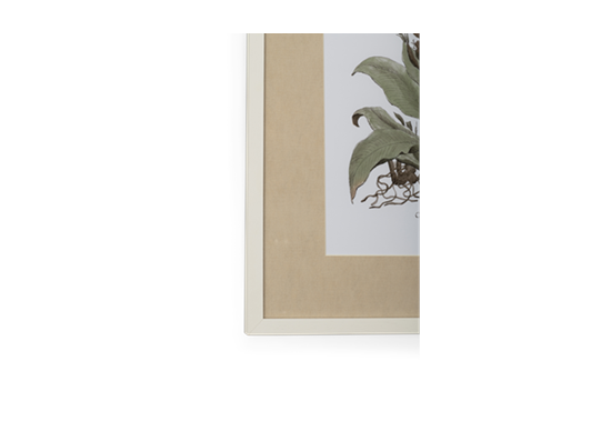 Clipsham Botanical Art - 7 - detail