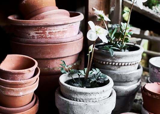 Potting Shed Tarragon Pots