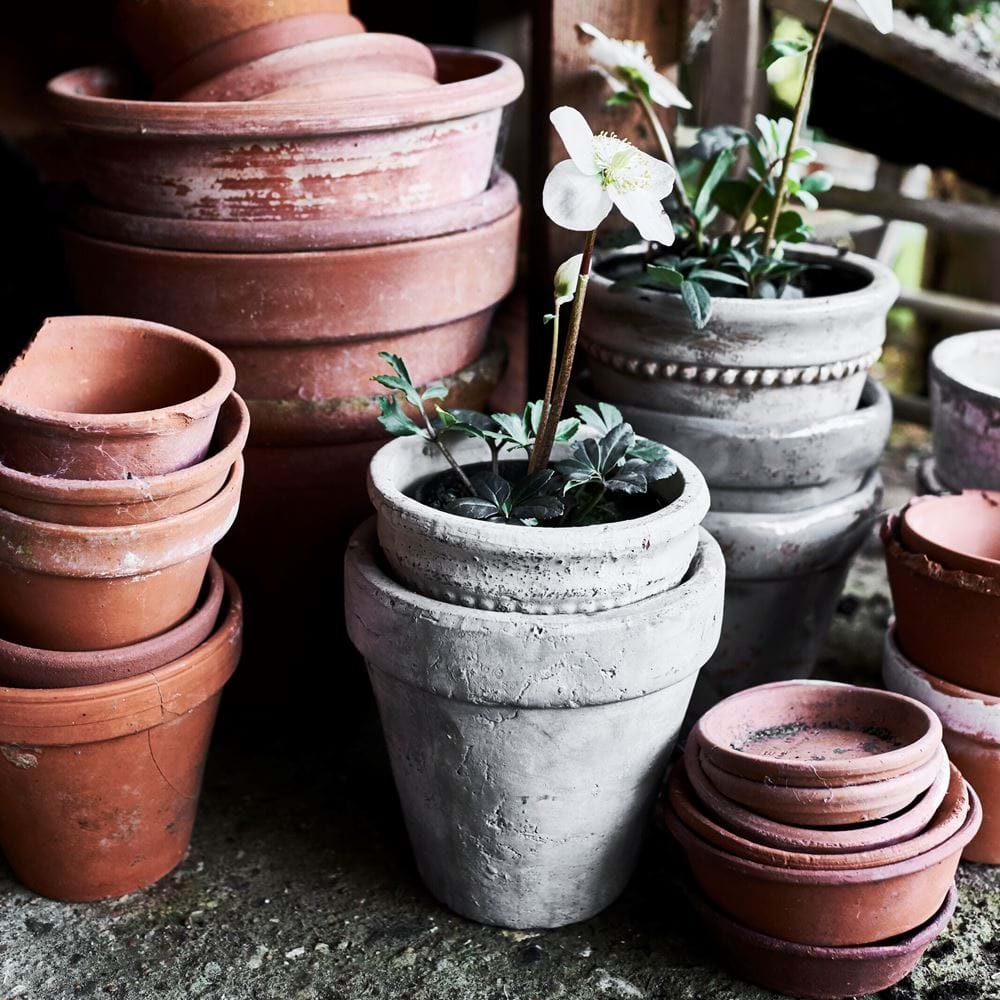 Potting Shed Tarragon Pots
