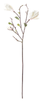 Magnolia Branch White
