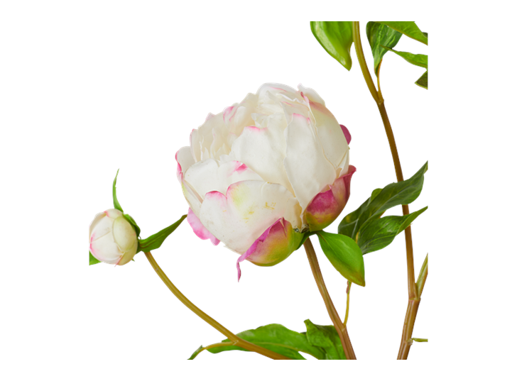 Peony Bundle_Petal Feel White_Detail