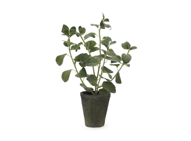 Mint Plant Textured_Front