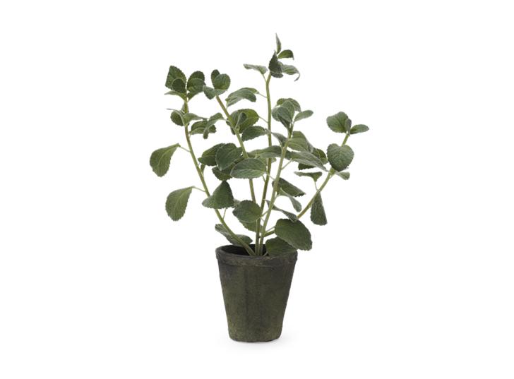 Mint Plant Textured_Front