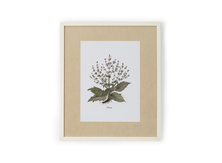 Clipsham Botanical Art - 8 - front