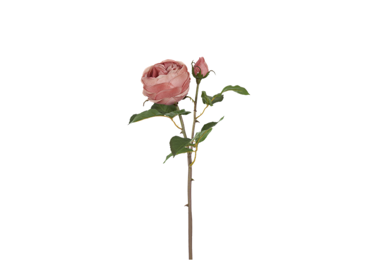 English rose warm pink_detail