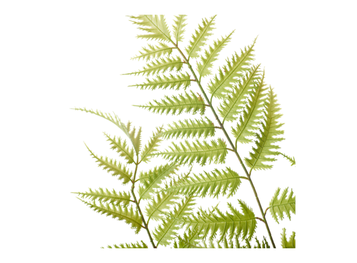 Lady Fern Large_Green_Detail